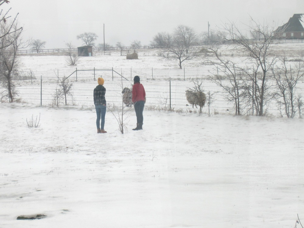 taylor, sarah, sheep in snow