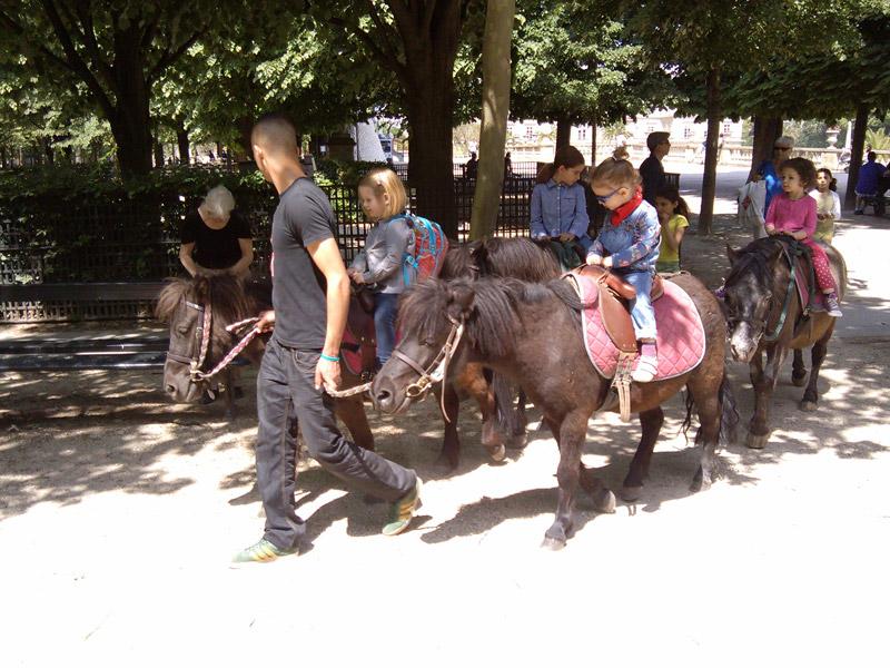 Jardin du Luxembourg ponies