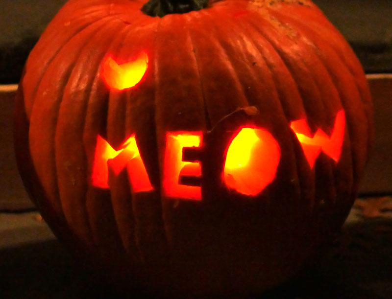 Taylor's meow pumpkin