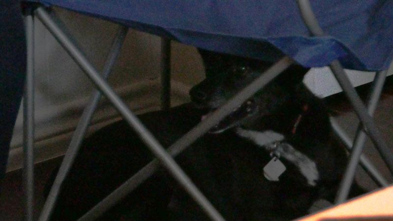 Macy hiding