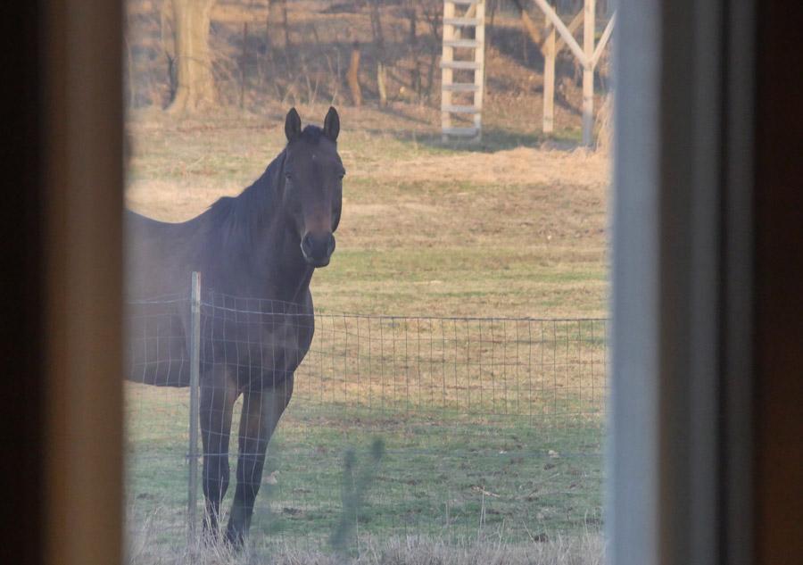 Horse wants food!
